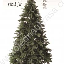 Елха Real fir